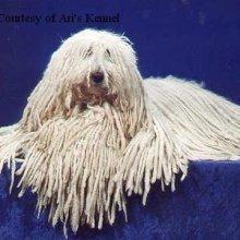 Looks just like a rug I saw for sale a couple weeks ago!