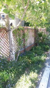 Isn't this a nice fence?