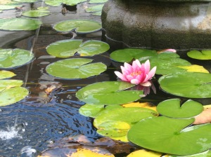 I saw a lovely pond with these very tall lotus in it...I wanted to replicate that - to no avail.